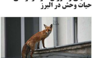 مدیرکل محیط زیست استان البرز … مدیرکل محیط زیست استان البرز … 311296001586979605 300x190