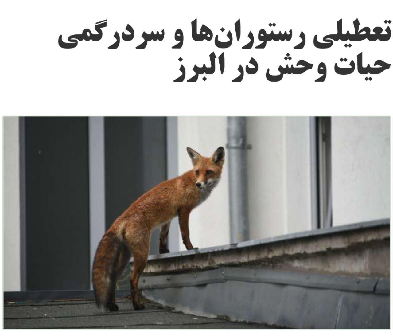 مدیرکل محیط زیست استان البرز … 311296001586979605