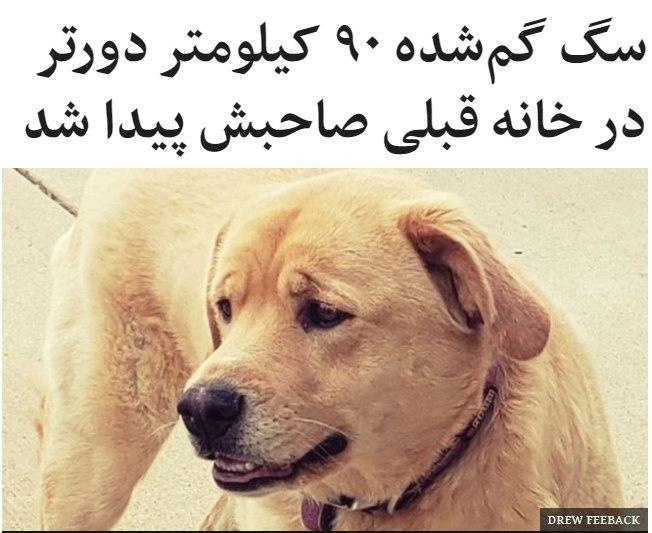 سگی که اوایل ژوئیه در ایالت کا … 711793001595339405