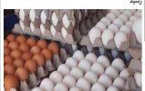 🔻قیمت هر شانه تخم مرغ به بیش … 🔻قیمت هر شانه تخم مرغ به بیش … 334424001631464202 160x100