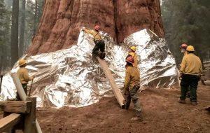 با ادامه آتشسوزی جنگلها و م … با ادامه آتشسوزی جنگلها و م … 624318001632058204 300x190