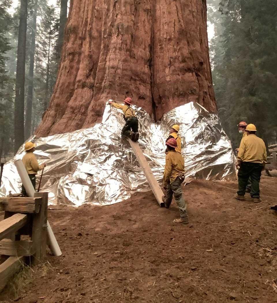 با ادامه آتشسوزی جنگلها و م … 624318001632058204