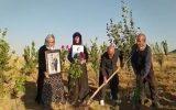 کاشتن نهال به یاد #رامین_حسین … کاشتن نهال به یاد #رامین_حسین … 757834001631005204 1 1 160x100